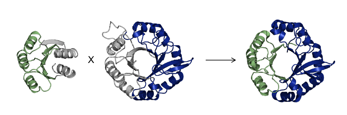 Reuse of protein segments